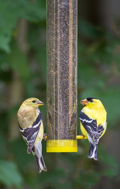 feeder zoom duncraft bit com little finch