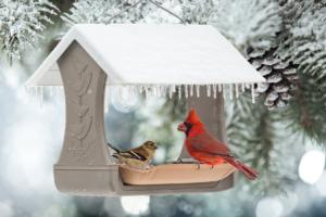 Cardinal Bird Feeding